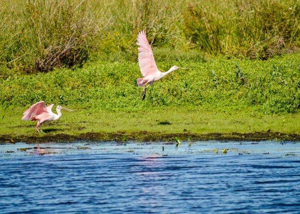 Esteros del Iberá, Golden Fly Fishing