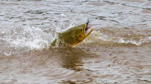 Terms and Conditions at Golden Fly Fishing